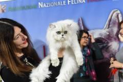 Felina Bari 2019