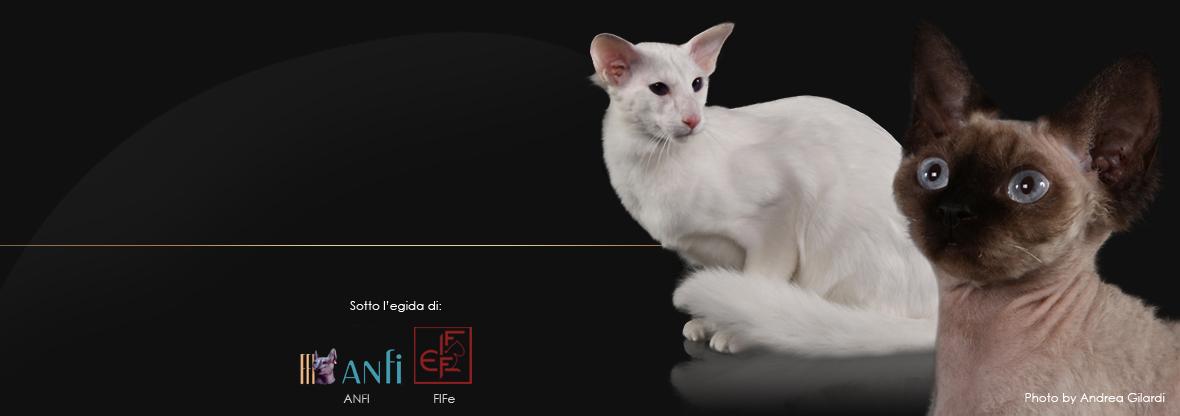 Esposizione Internazionale Felina di Bari