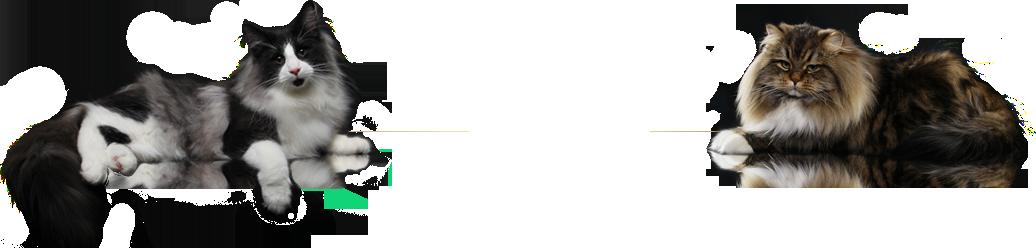 Felina Bari